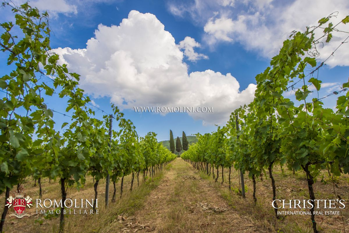Additional photo for property listing at Tuscany - WINE ESTATE FOR SALE IN VALDARNO SUPERIORE, TUSCANY Pergine Valdarno, Italia