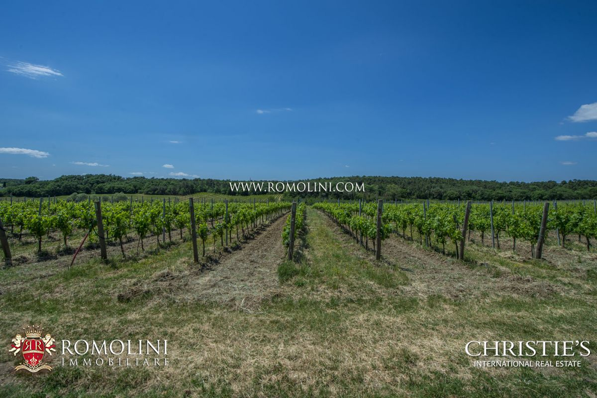 Additional photo for property listing at Umbria - FARM WITH 13 HA VINEYARD FOR SALE ON THE TRASIMENO LAKE Castiglion Del Lago, Италия