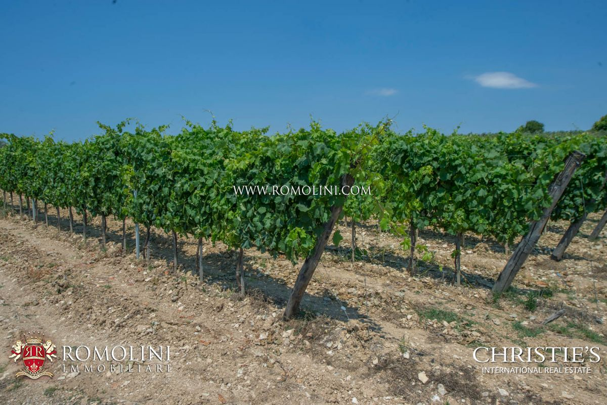 Additional photo for property listing at Tuscany - MORELLINO DI SCANSANO: 10,4 HA PRESTIGIOUS CELLAR FOR SALE Grosseto, 義大利