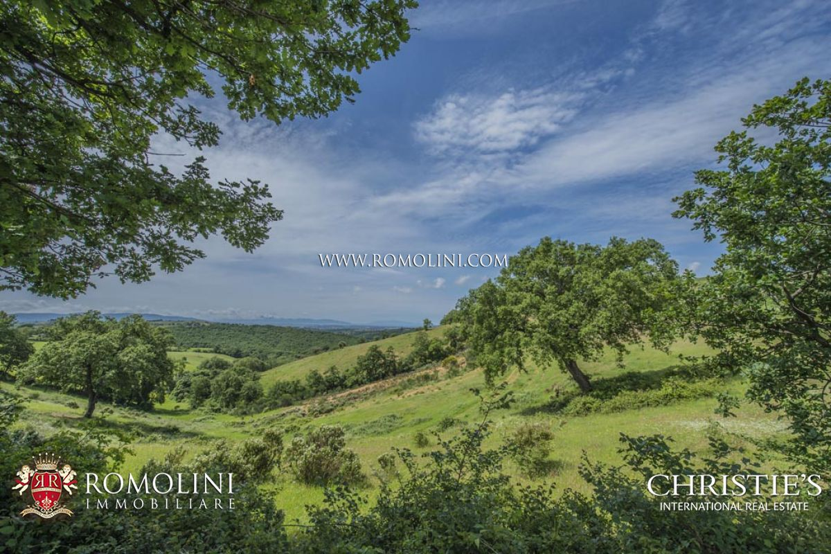 Vineyard for Sale at Tuscany - VINEYARD FOR SALE IN MAREMMA: MORELLINO DI SCANSANO, IGT TOSCANA Maremma, Italy