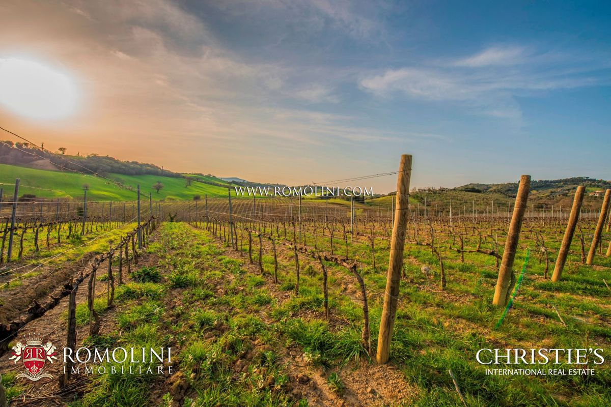 Tuscany - STATE OF THE ART WINERY WITH MODERN WINE CELLAR FOR SALE IN  MAREMMA: a luxury home for sale in Grosseto, , Grosseto - Property ID:1014   