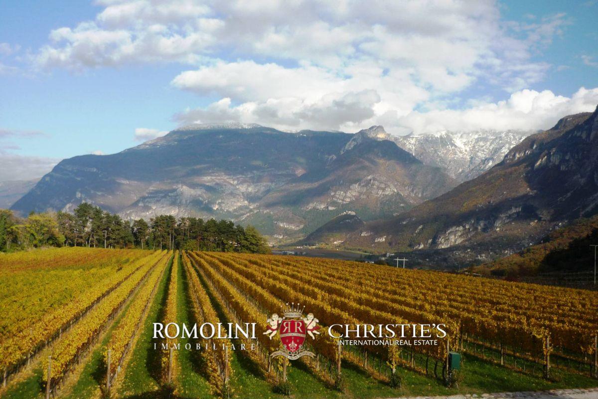 Maso Trentino Tenuta Vitivinicola Azienda Vinicola In Vendita