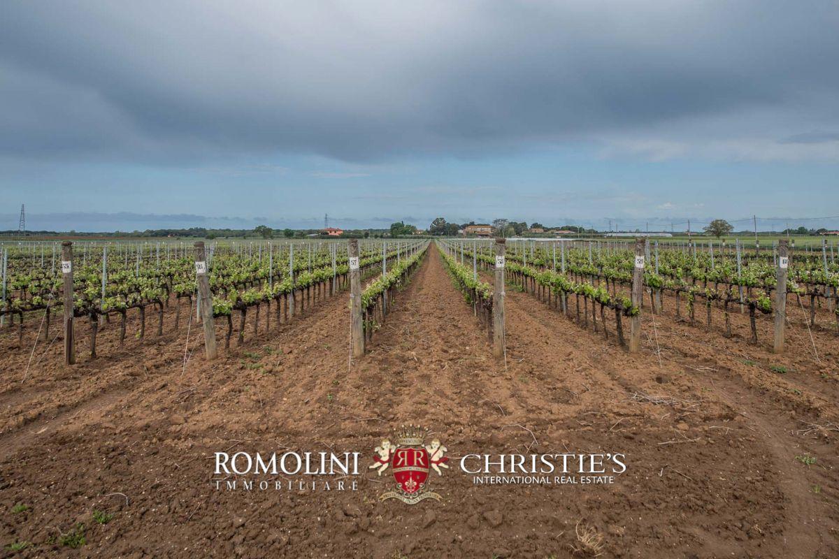 Tuscany - BOLGHERI DOC: WINE ESTATE, CELLAR, VINEYARDS AND VILLA FOR