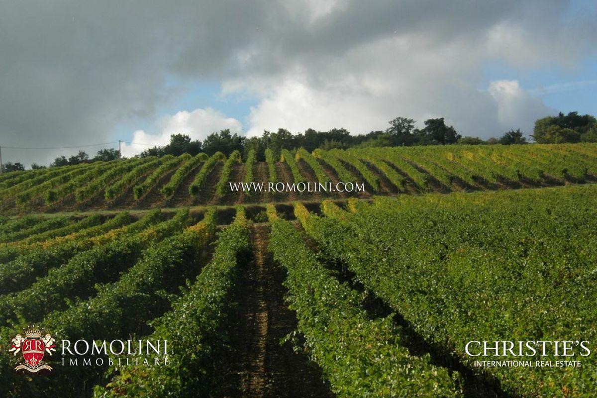 Matrimonio Vigneto Toscana : Vigneto in vendita toscana val d orcia