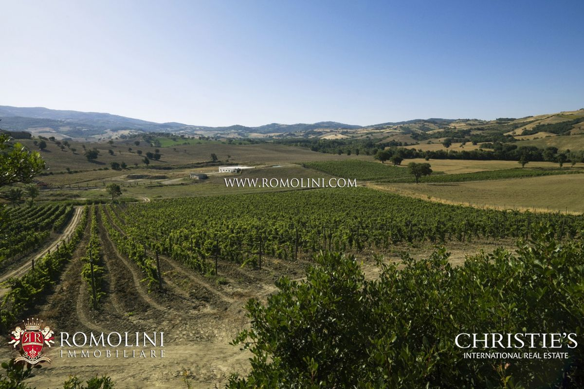 Additional photo for property listing at Tuscany - WINE ESTATE FOR SALE IN MAREMMA, MONTECUCCO Grosseto, Italia